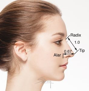 Facial proportion - Length of Nose - Rhinoplasty